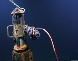"""Corky the Octopus"" lurks on the connector, through which, instrument measurement data are transmitted from the ODP 1026b CORK to the NEPTUNE Canada seafloor observatory network. The CORK was installed by the International Ocean Drilling Program (IODP). (Source: Neptune Canada)"